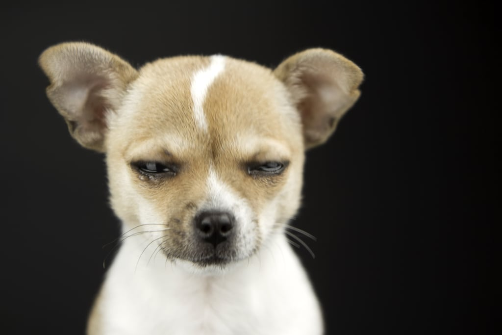Pictures of Dogs Making Funny Faces