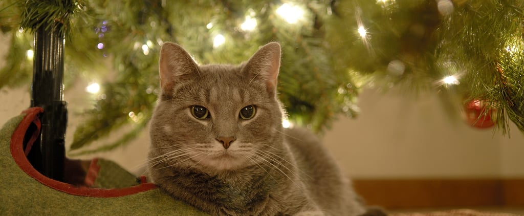 Why Does My Cat Like to Lay Under the Christmas Tree?