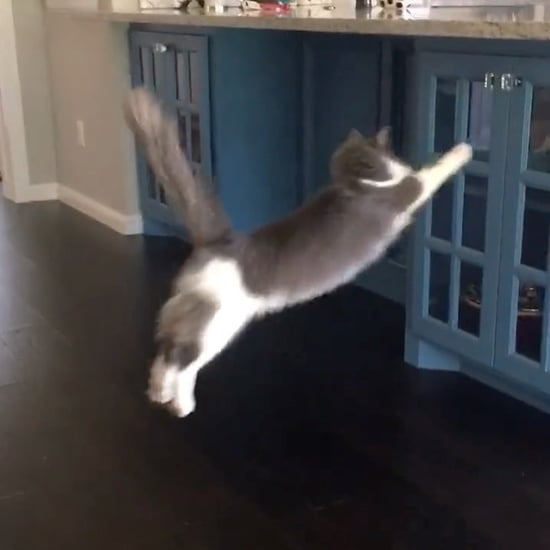 Cat Trying to Jump Onto the Counter | Video