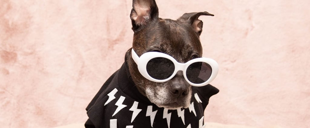 Pit Bull Poses in Schitt's Creek Character Costumes | Photos