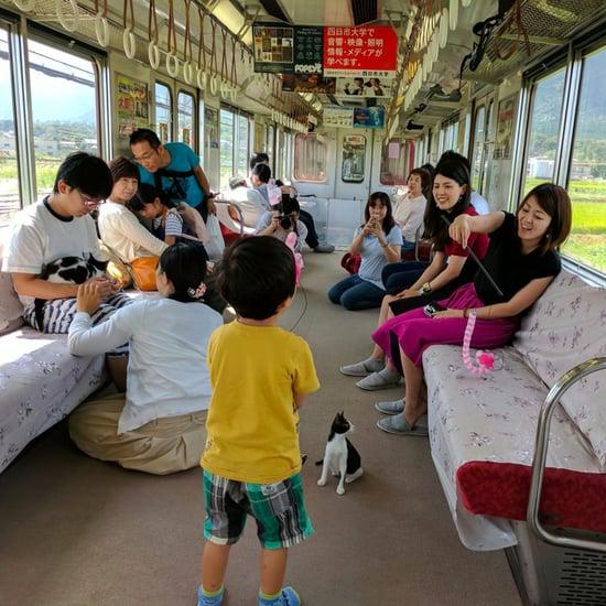 Cat Cafe Train in Japan