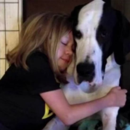 Little Girl and Her Great Dane Service Dog