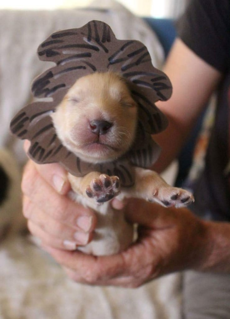 Newborn Puppies In Halloween Costumes Popsugar Family