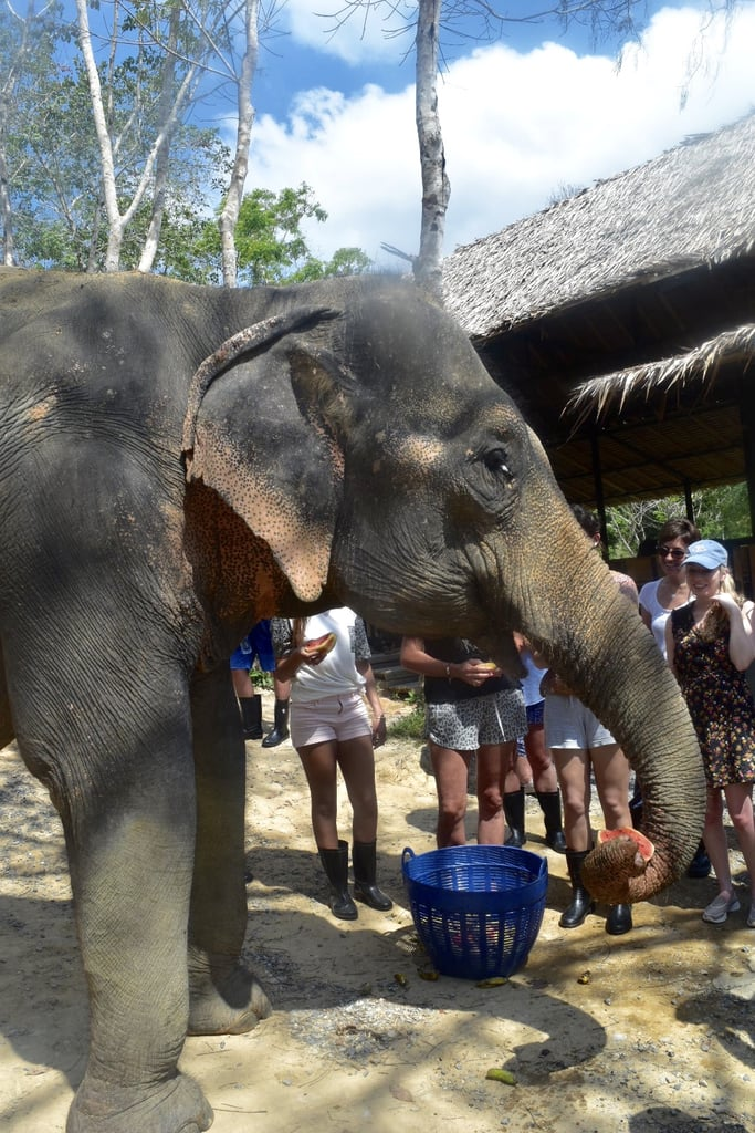 The Trouble With Elephant Trekking