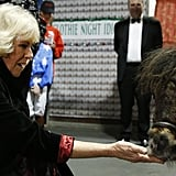 Camilla, Duchess of Cornwall, attempted to allure a pony with some mints at the Horse of the Year show in London.