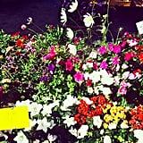 The Farmers Market Flowers
