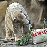 Happy Birthday, Knut the Cute!