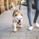 2 Experts on What You Should Do If Your Dog Is Attacked by Another Dog