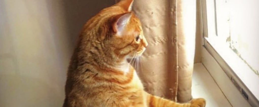 Photos of Fat Cats