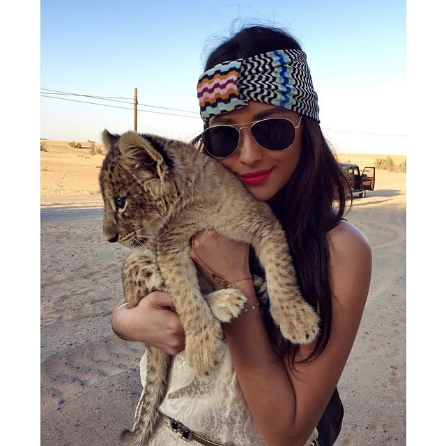 We can't decide who is cuter: the cub or Shay.
