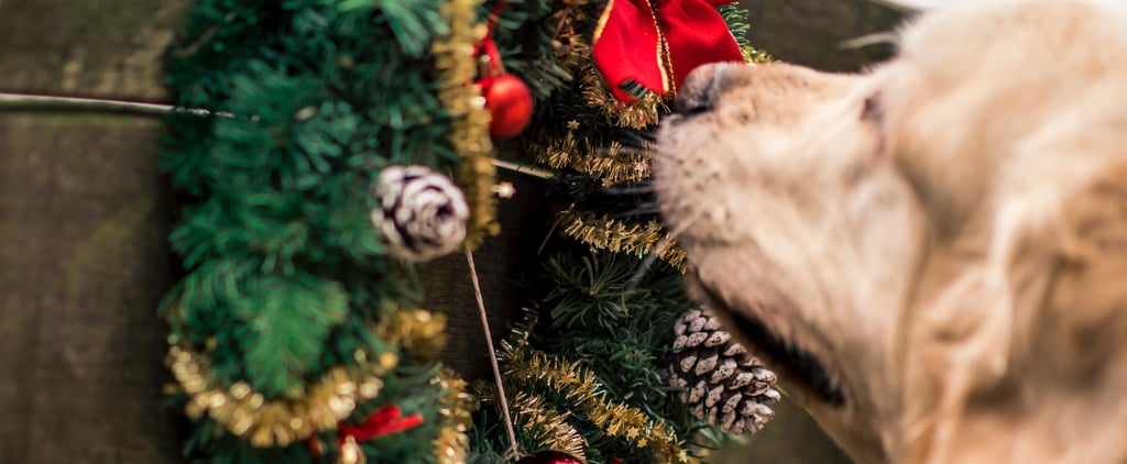 Pet-Friendly Holiday Decoration Tips