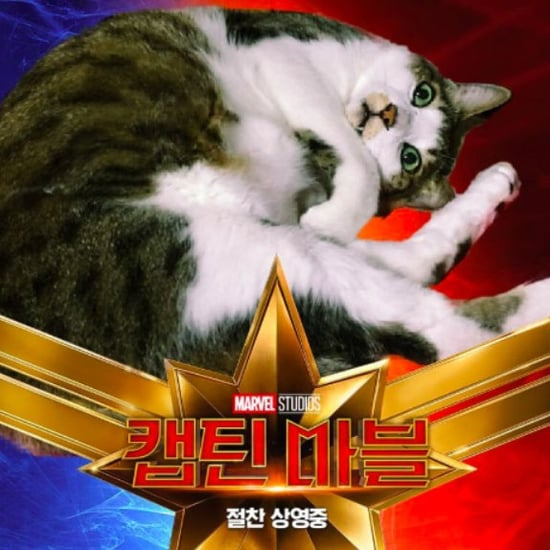Captain Marvel Cat Photoshop Tweets
