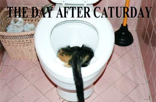 The Day After Caturday