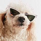 Cat-Eye Pet Sunglasses