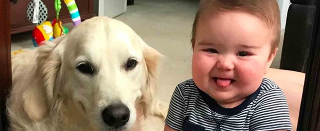Photos of Golden Retrievers and Babies