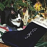 Socks, the cat, keeps an eye on the Clinton's Christmas bounty. Source: The White House