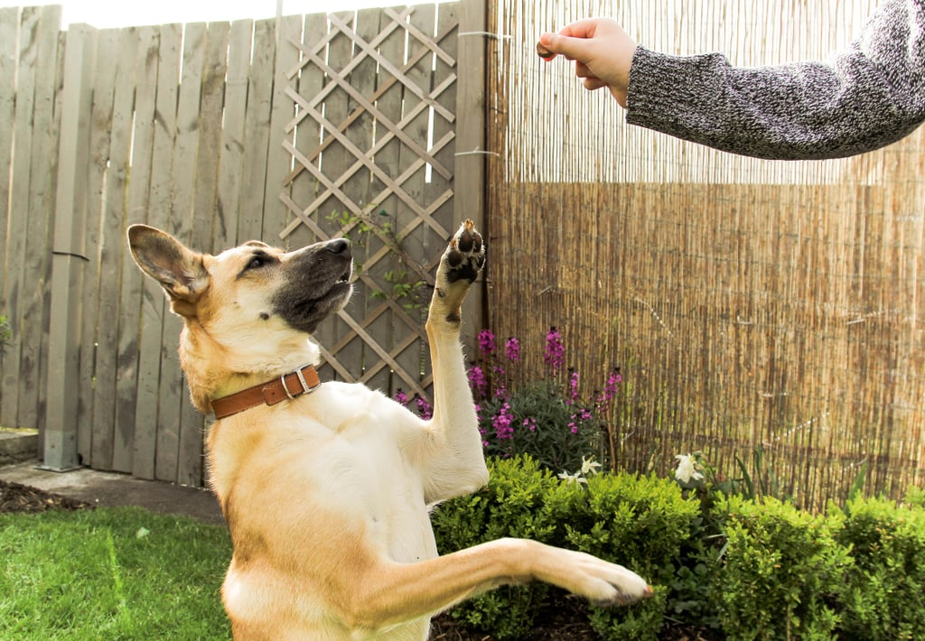 Expert-Recommended Dog Training Treats