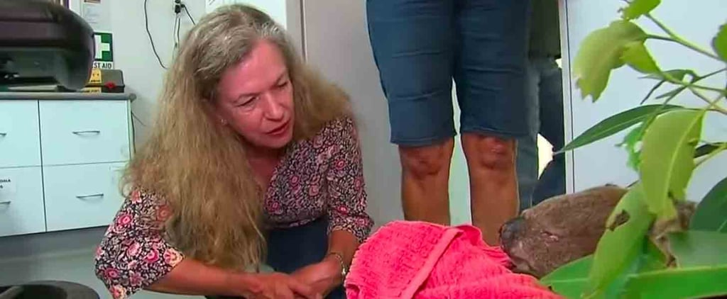 Woman Reunites With Koala She Saved From the NSW Bushfires
