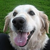 Holly: Pet of the Day