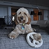 Jax & Bones Peace Rope Toy
