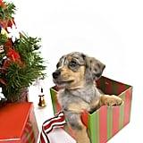Cute Present Alert