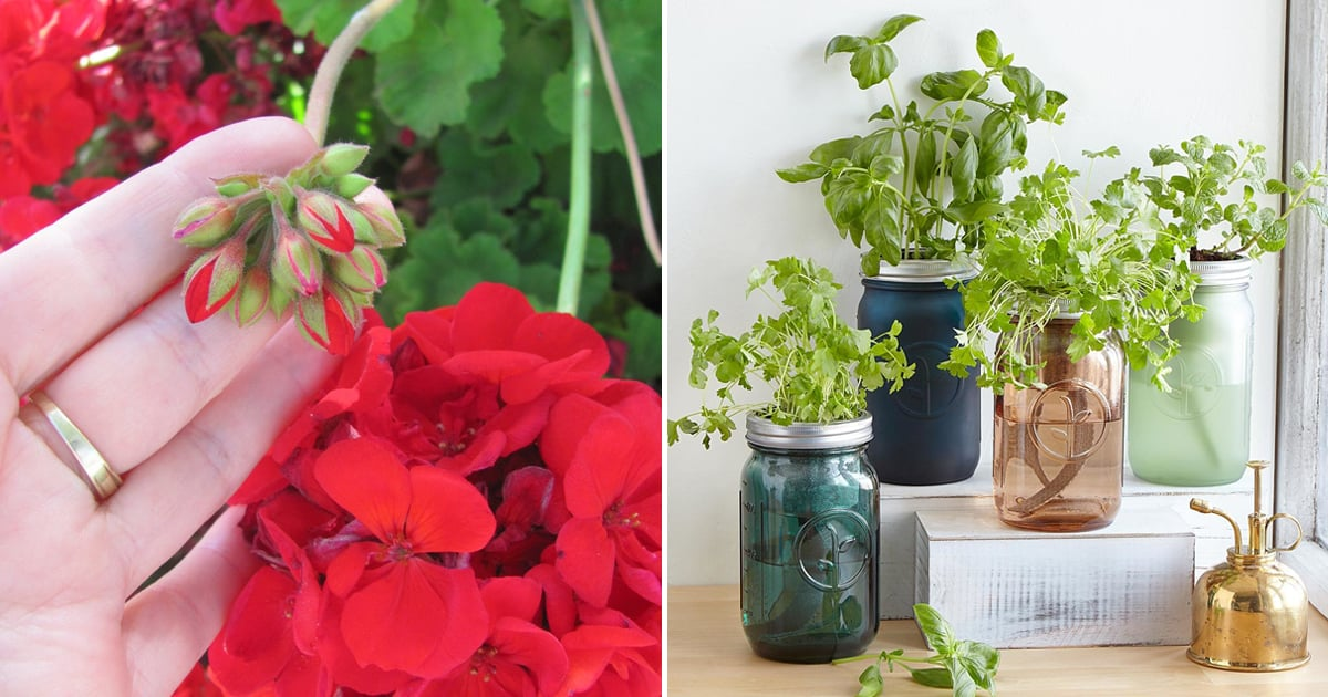 13 Mosquito-Repelling Plants That Will Save You From Bites This Summer