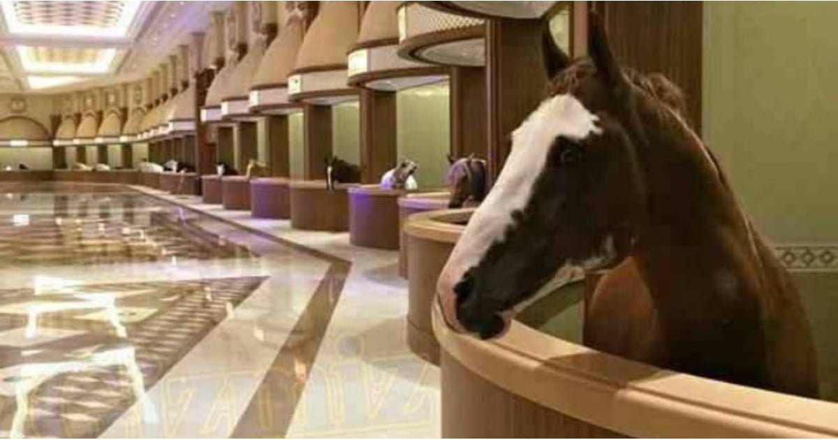 Most Luxurious Horse Stable In Dubai Popsugar Middle