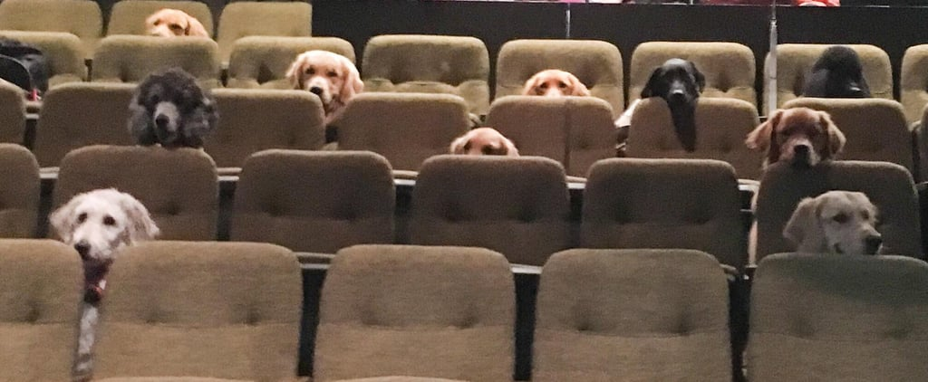 Service Dogs at Live Billy Elliot Performance