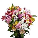 Globalrose Fresh Alstroemeria Flowers