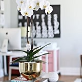 Water Your Orchid With an Ice Cube