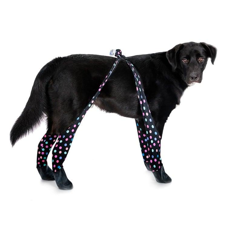 Leggings For Dogs