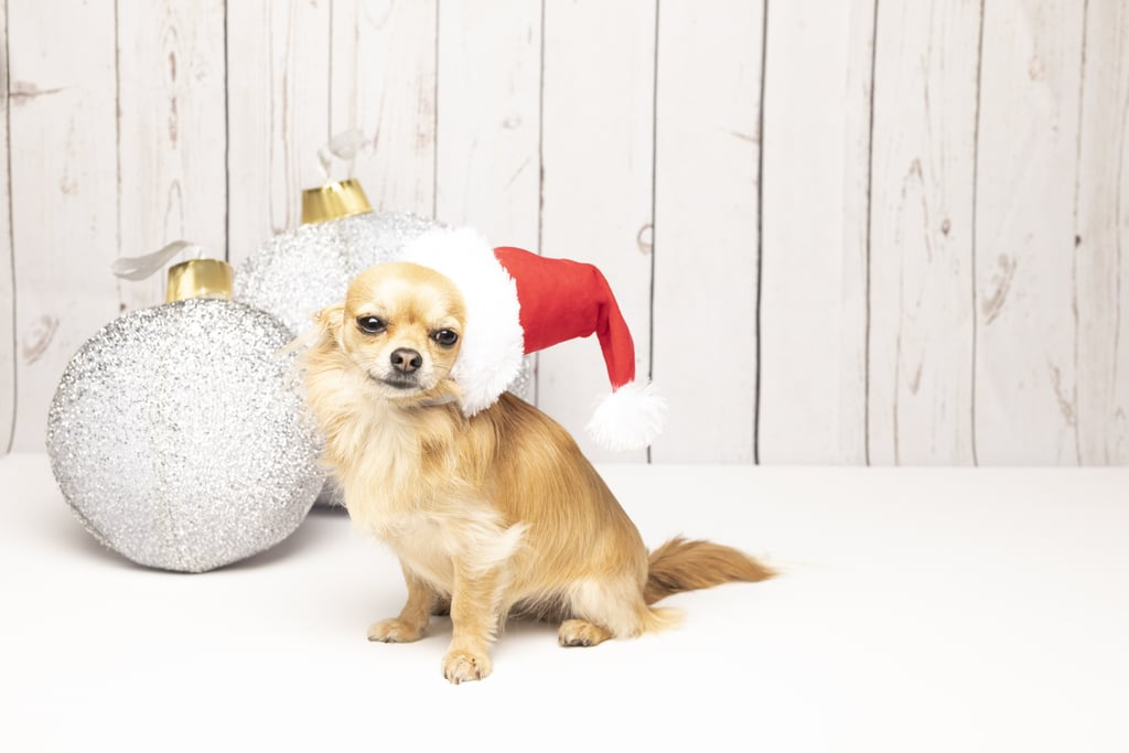 Cute Christmas Puppies.Tiny Hat Big Christmas Wishes Cute Pictures Of Christmas