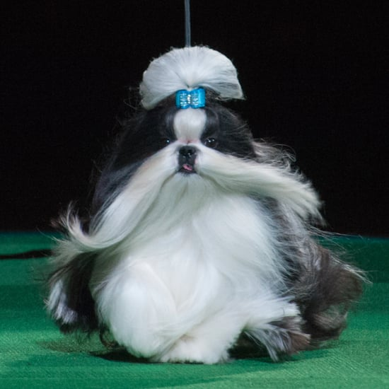 Funny Names Of Dog Show Winners