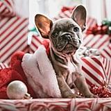 Christmas Card Perfection