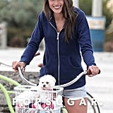 Alessandra Ambrosio's teacup Maltese, Lola, can usually be seen running errands around LA or hanging on the set of Victoria's Secret shoots with her model mom.