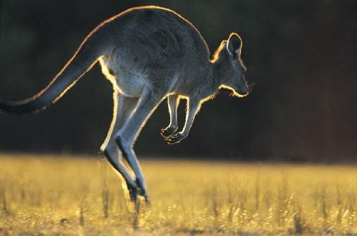Kangaroo Creature Features on Petsugar
