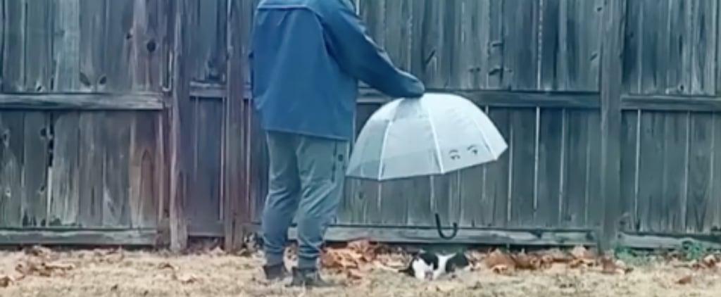 Man Follows Dog Around the Backyard With an Umbrella | Video