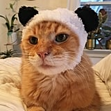 Bear Cat Cap