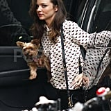 Miranda Kerr carried her puppy around NYC.