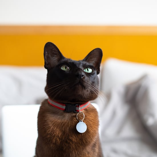 Why Does My Cat Have a Bald Spot Under Their Collar?