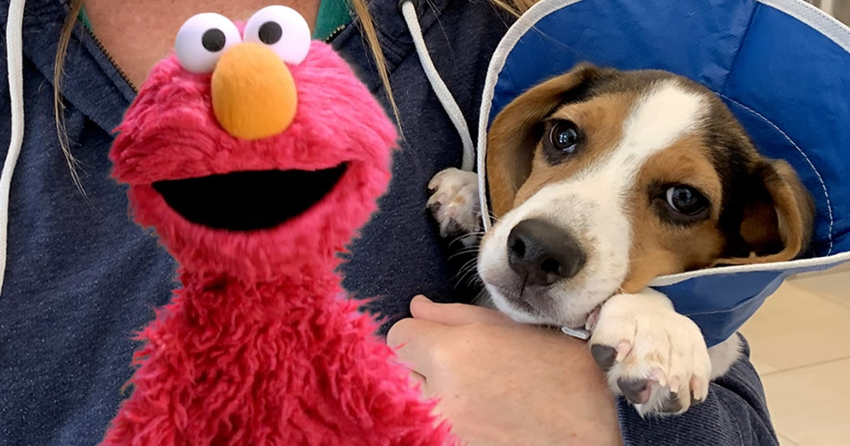 This Video of Elmo Helping a Family Rescue a Dog Is the Human Version of a Belly Rub.jpg