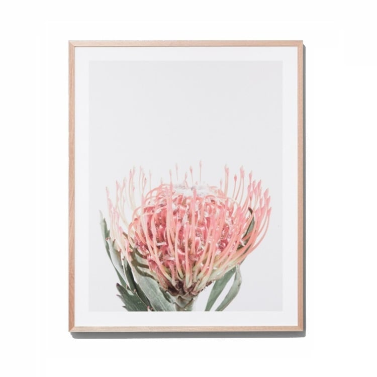 Botanical Art Prints Australia