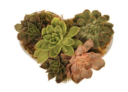Crave Worthy: Jayson Home & Garden Echeveria Heart
