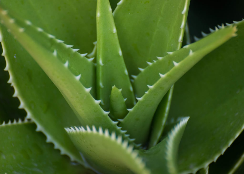 Beauty Benefits of Aloe Vera