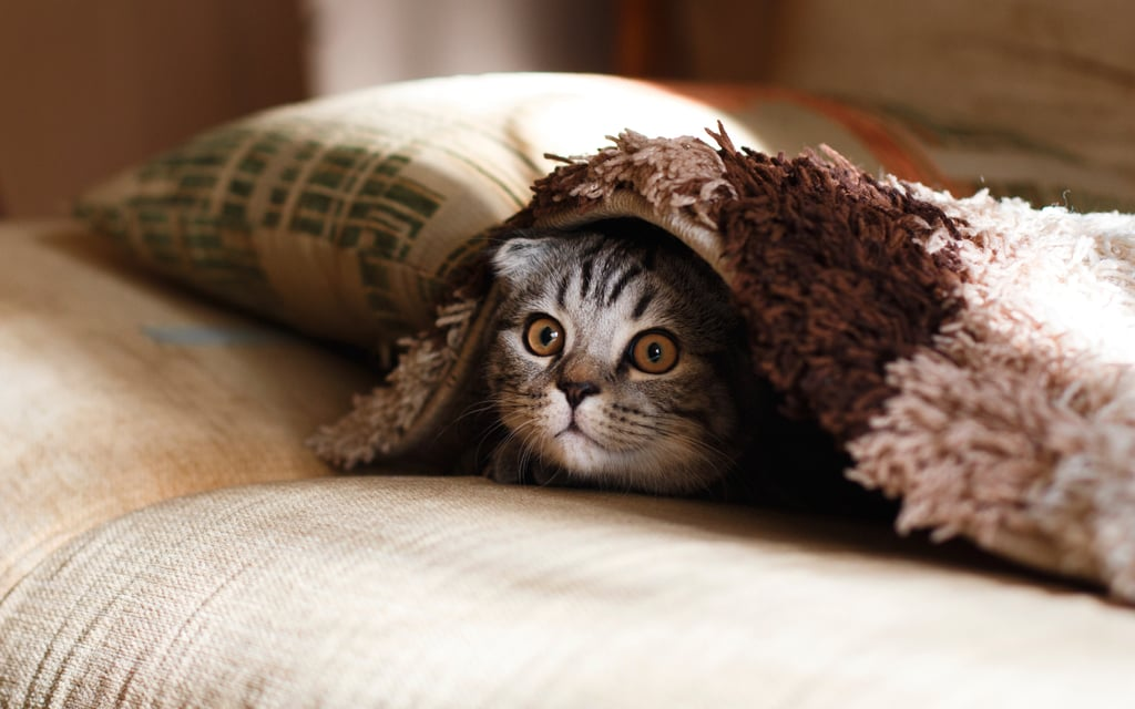 Hiding under the blanket, dude?