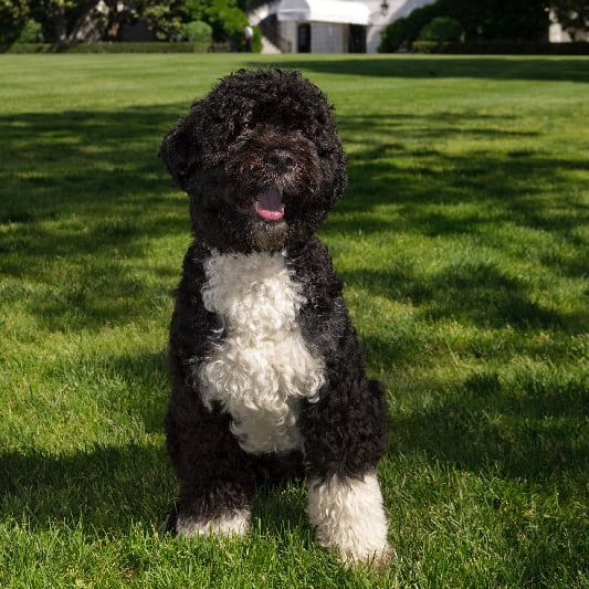 Barack and Michelle Obama Discuss Dog Bo in Video