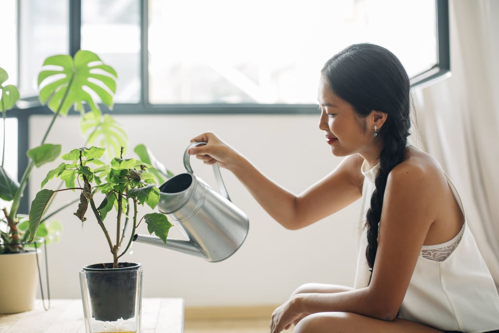 Plants That Reduce Humidity