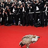 A vulture lands on the Cannes Film Festival red carpet to introduce 2006's animated feature Over the Hedge.