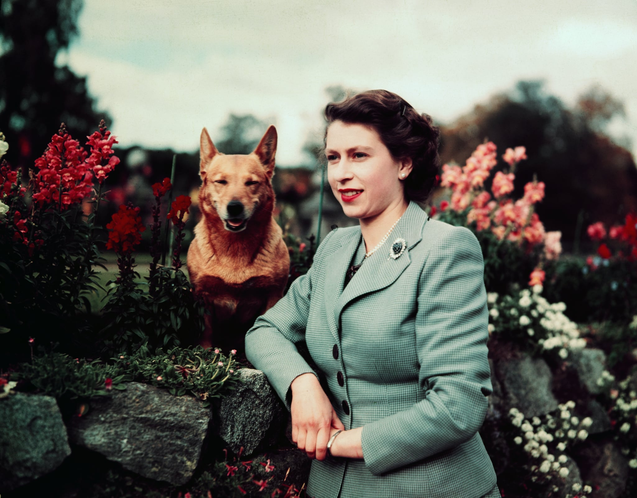 March,1953- Queen Elizabeth II of England--closeup in garden with dog. UPI colour slide.