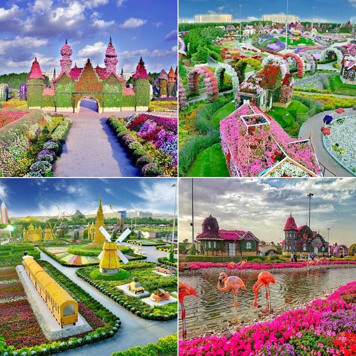 Dubai Miracle Garden Photos